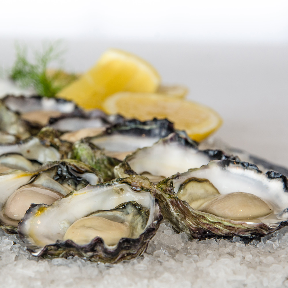 sq1000-oysters-8670